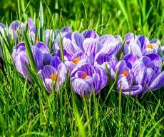 kartinki24_ru_flowers_380