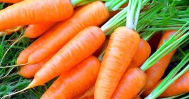 Морковка - секреты выращивания