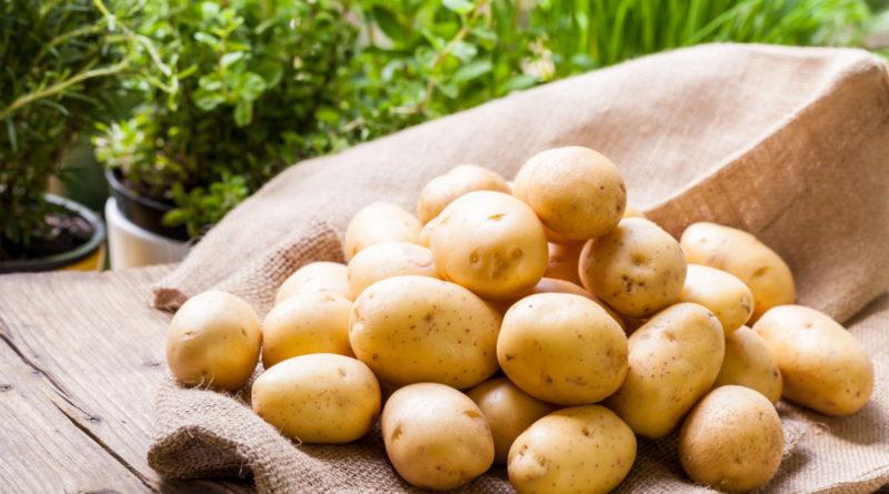 Как повысить урожайность картофеля