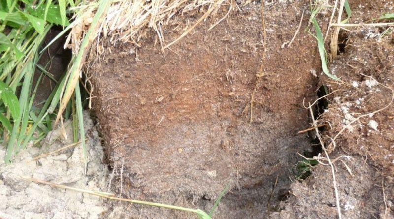 Глиняная почва и как на ней все растет?