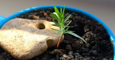Как вырастить дерево с нуля из семени