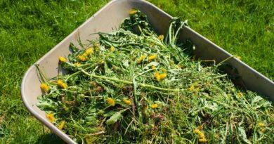 Как оградить огород от сорняков?