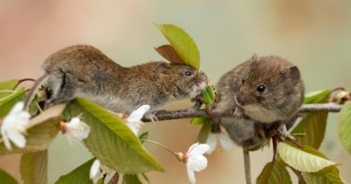 Как защитить на зиму малину и яблони от мышей?