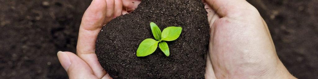 Органические удобрения для дачи